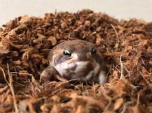 rain-frogs21