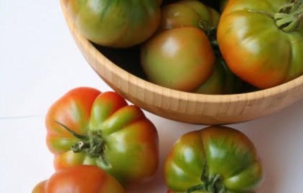 Spagnetta, pomodoro, Lazio, Gaeta, trevaligie
