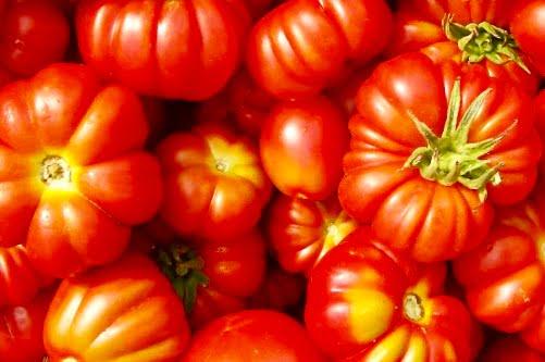 Le spagnolette, i pomodori di Gaeta. Profumo e sapore di casa.
