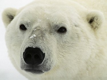 Polar Bear Cake (3/3)