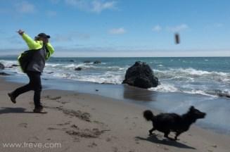 Carson fetching a stick at Pinnacle Gulch beach.