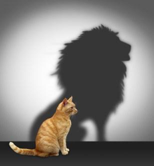 confidence-cat-lion