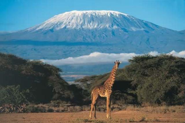 kilimanjaro-giraffe1
