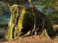 Tree and Roots #2