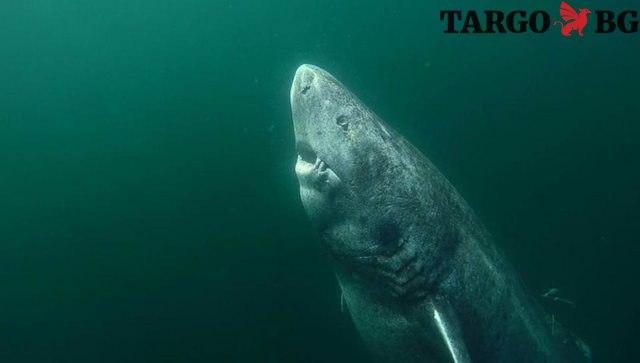 Най-старата акула