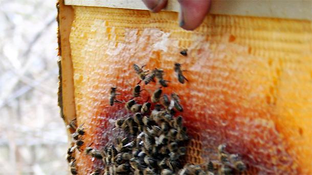 Родопската пчеларка леля Митра: Давам ви лекарство, за което ще ме споменувате с добро! (две от най-силните й рецепти)