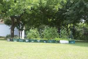 A home garden in Winston-Salem