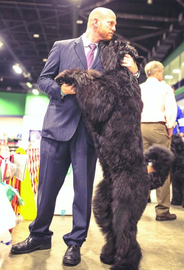 Vincent the black Russian terrier with his handler, Jamie Clute before the conformation. (photo by Caleb Smallwood)