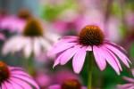 sadflowers