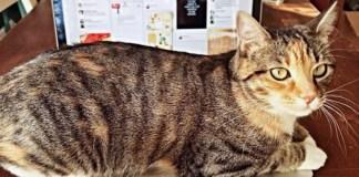 clementine-cat-lauren-barber-triad-city-beat