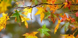 autumn-weekender-fall-calendar