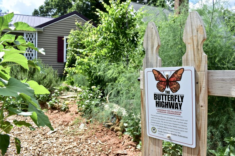 justin-sizemore-butterfly-highway-garden