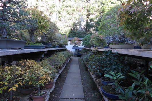 A small town north of Tokyo, in Omiya, has for about one hundred years, been home to many bonsai nurserymen and is mecca for anyone even remotely interested in bonsai.