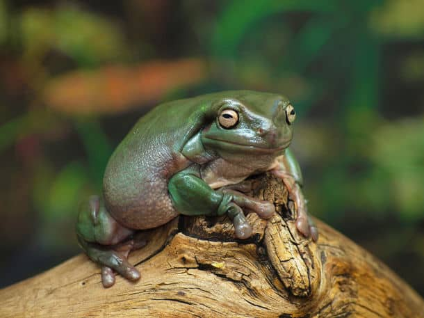 frog fest apex nc