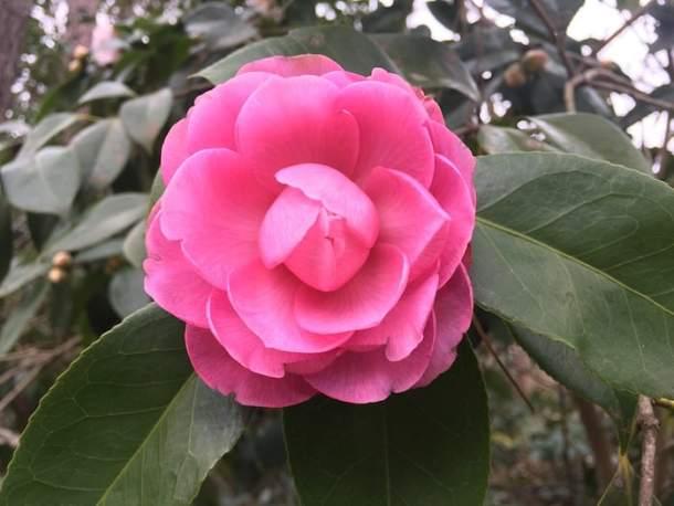 flower duke gardens