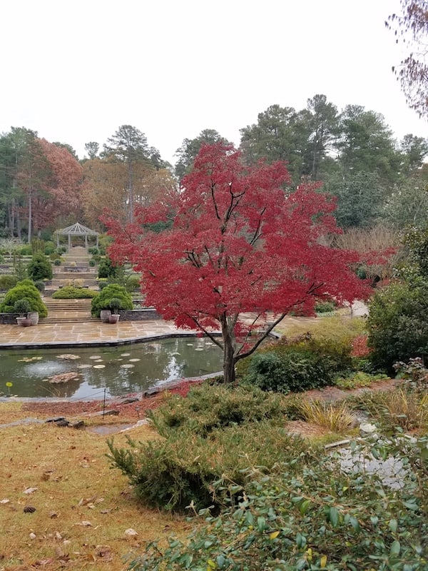 duke gardens fall durham nc