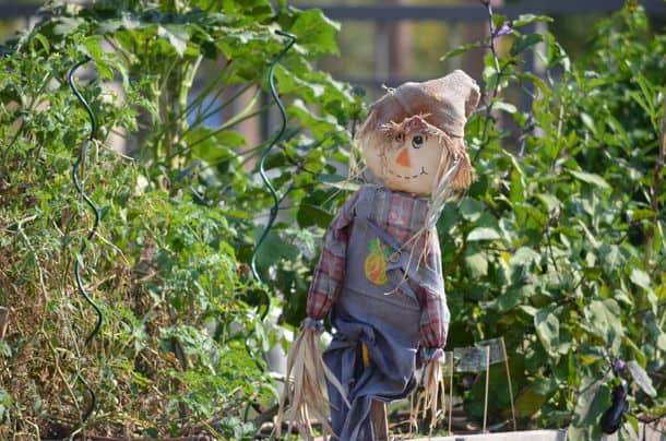 A Scarecrow In A Summer Garden