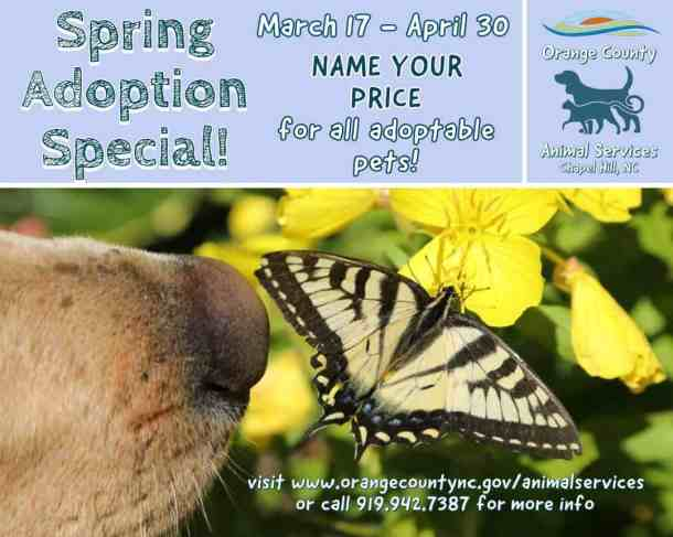 flyer for animal adoption special