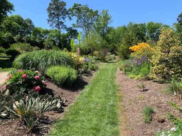 Path and flowers in Juniper Level Botanic Garden