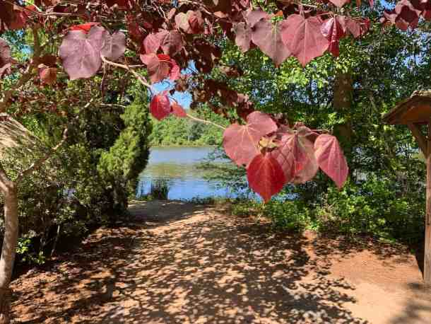 View of lake through leaves. Historic Yates Mill County Park
