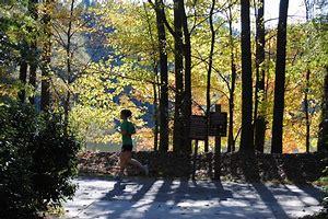 Apex NC jogger