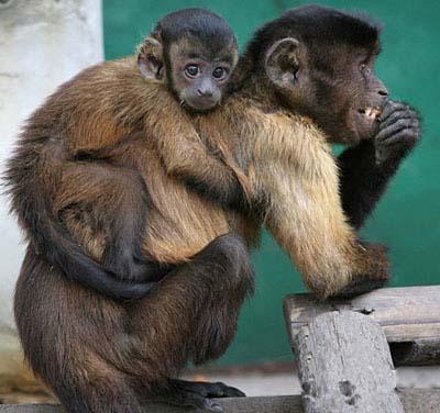 monkey_on_mom