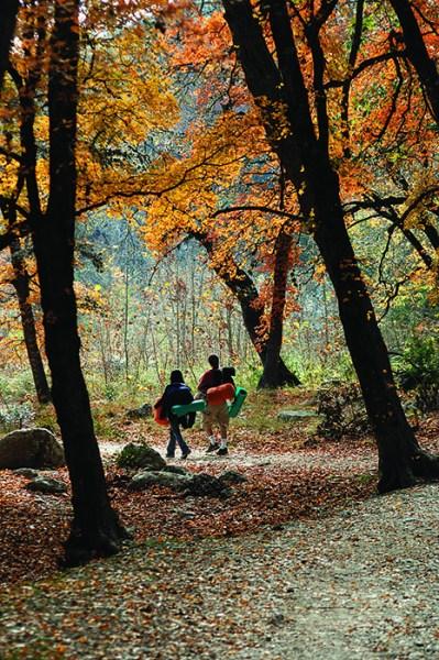 Lost Maples Texas Parks Tribeza