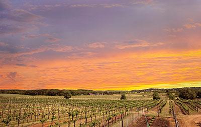 spicewood vineyard austin