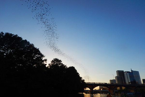 austin bats bat fest atx