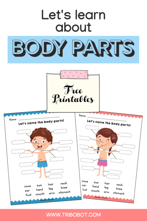 Printable: Identify the Body Parts Learning Worksheets