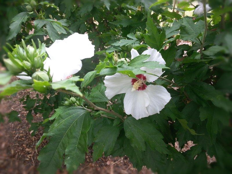 flowerpower11