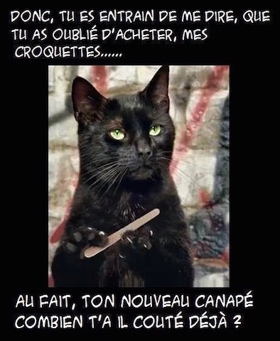 Chat humour cat