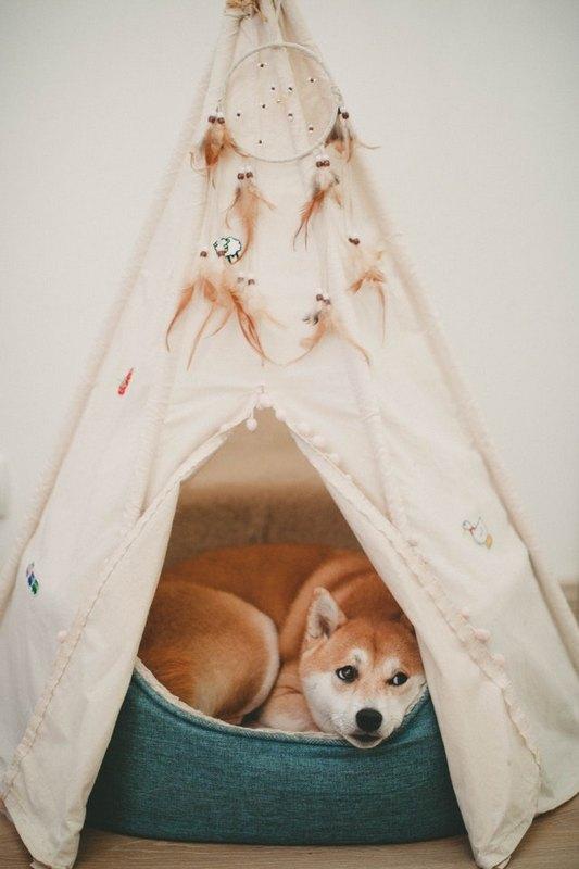 quel couchage pour mon chien le tipi