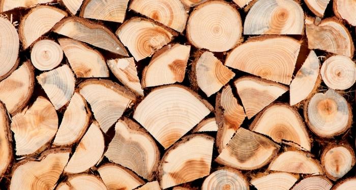 Приведен прилепчанец за крадење дрва
