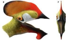 Image (1) Crani-reptil-fossil.jpg for post 7761