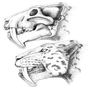 Reconstrucció de l'aspecte d'Albanosmilus jourdani de Marta Palmero. ICP.