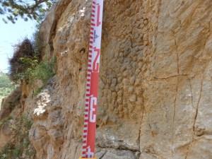 Troballa de l'empremta de la pell de dinosaure in situ