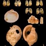 Diverses restes malacològiques trobades a la Cova Mollet III (Serinyà, Pla de l'Estany)