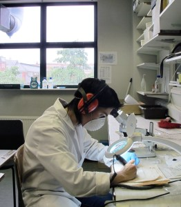 Procés de mostreig de dents arqueològiques per l'estudi d'isòtops de mobilitat (estronci i oxigen)