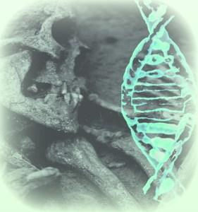 Imatges de restes òssies neolítiques