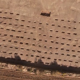 8. Detall rases de vinya. Vista aèria del conjunt de rases de vinya documentades. Fotografia: Arqueòlegs.cat