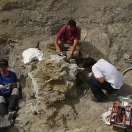 2. Excavació a Orcau, terme d'Isona i Conca Dellà, Pallars Jussà, 2013. Fotografia: Institut Català de Paleontologia Miquel Crusafont