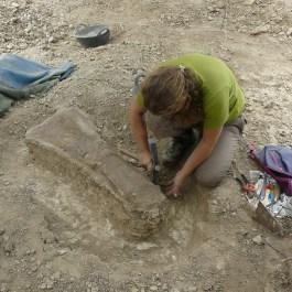 4-Excavació al jaciment paleontològic de les Gavarres, 2019. Fotografia: Institut Català de Paleontologia Miquel Crusafont