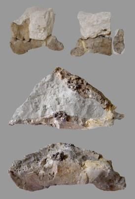 Restes de la mandíbula del sireni de Santa Maria de Miralles (Anoia)
