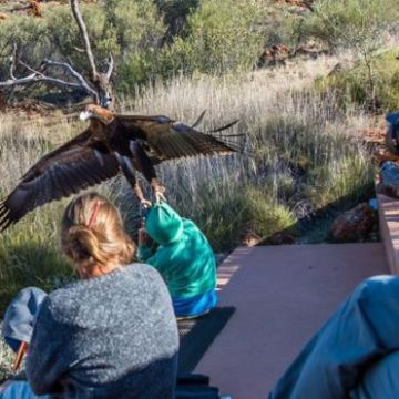 An eagle attempted to lift a little boy into the air during a bird show at Alice Springs in Australia. PHOTO: INSTAGRAM