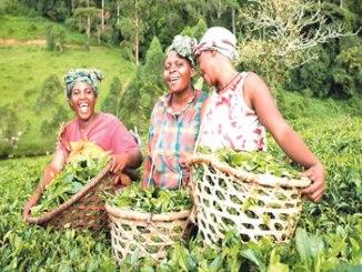 WOMEN-farming