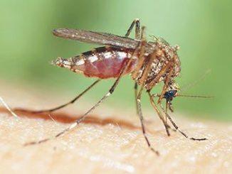 mosquito-control1