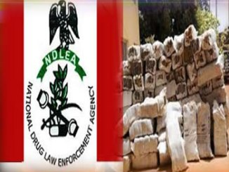ndlea-and-indian-hemp