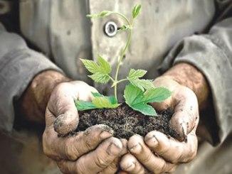 tree-planting-large