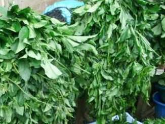 vegetable-fluted-pumkim